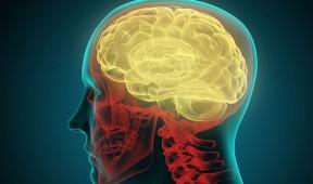 CRW0K4-brain_2703713b